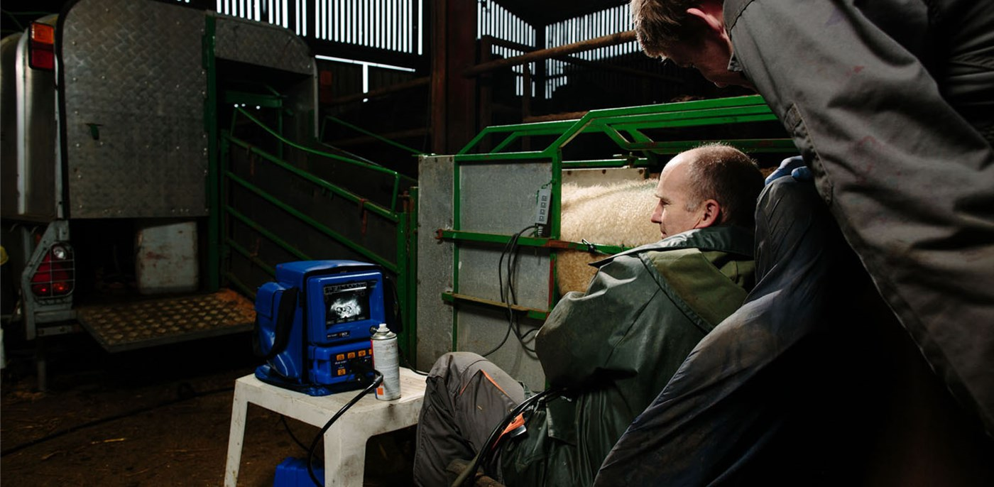 Ovi-Scan sheep ultrasound scanner